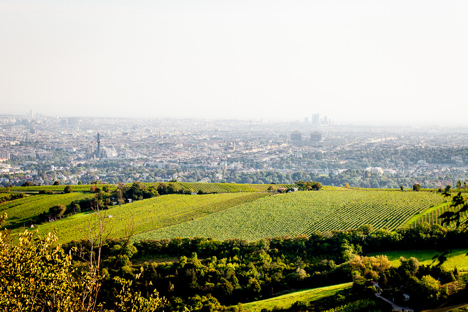 Blick vom Leopoldsberg auf Wien